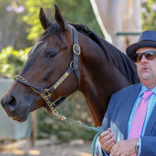 Myracehorse Horse Racing Ownership Buy A Racehorse